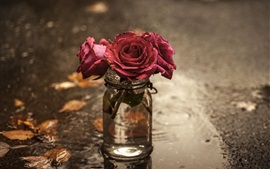 Red roses, glass cup, wet ground