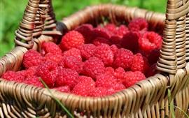 Ripe red raspberries, basket