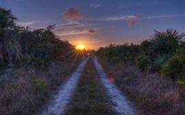 Estrada, grama, pôr do sol