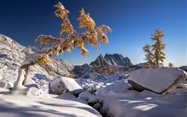 Скалы, снег, деревья, зима