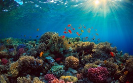Sea, corals, fish, underwater