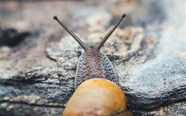 Preview wallpaper Snail, antenna, rocks