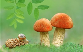 Snail, mushrooms, green leaves, grass