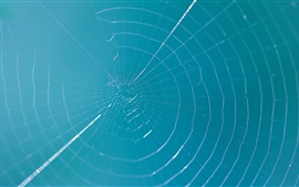 Preview wallpaper Spider web, blue sky