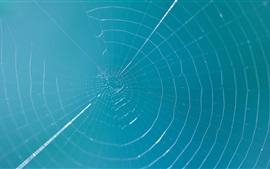 預覽桌布 蜘蛛網,藍藍的天空