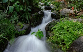Córrego, pedras, plantas