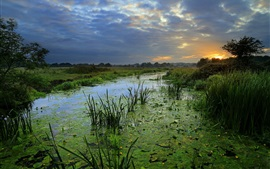 Preview wallpaper Summer, duckweed, swamp, grass, clouds, sunset