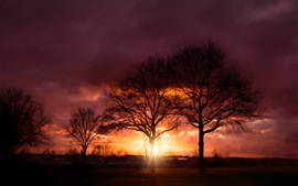 Sunset, trees, glare, sun rays, clouds