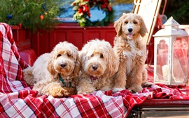 Preview wallpaper Three dogs, plaid cloth