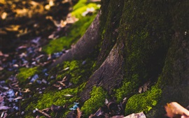 Tronco de árvore, musgo, floresta