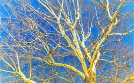 Дерево, ветки, осень, голубое небо