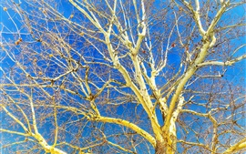 Tree, twigs, autumn, blue sky
