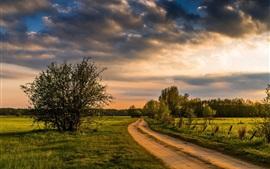Árboles, campos, camino, campo