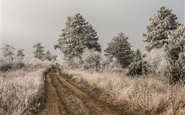 Trees, grass, path, frost, cold