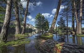 미리보기 배경 화면 나무들, 호수, 산, 구름