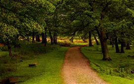 Preview wallpaper Trees, path, grass, green, UK, Peak District National Park