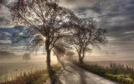 Preview wallpaper Trees, road, fog, green fields, sun rays, morning