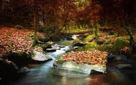 Árvores, pedras, riacho, folhas, outono
