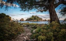 Árvores, pedras, lago, ilha