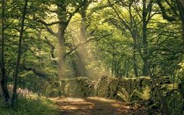 Árvores, parede de pedras, musgo, raios de sol