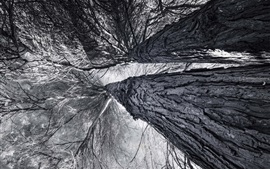 Trees, twigs, from bottom view, black and white picture