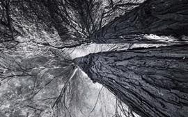 Деревья, ветки, вид снизу, черно-белое изображение