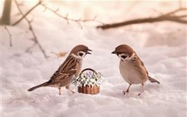 Dos gorriones, nieve, flores