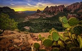 États-Unis, Sedona, montagnes, rochers, cactus