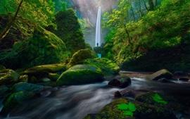 Cachoeira, musgo, verde, arbustos, pedras, pessoas, EUA