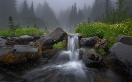 Waterfall, stream, stones, grass, trees, fog, morning