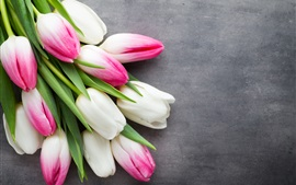 Preview wallpaper White and pink tulips, gray background