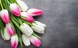 Aperçu fond d'écran Tulipes blanches et roses, fond gris