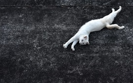 Preview wallpaper White cat lying on ground