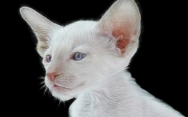 White kitten, blue eyes, black background