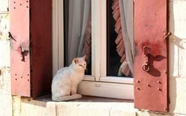 Preview wallpaper White kitten sit on windowsill