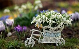 Snowdrops brancos, bicicleta de brinquedo