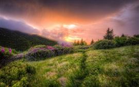 Flores silvestres, hierba, nubes, amanecer, niebla