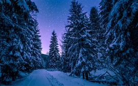 Winter, forest, trees, snow, starry