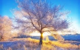 Hiver, neige, arbres, rayons de soleil, matin