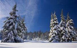 Invierno, árboles, nieve, frío