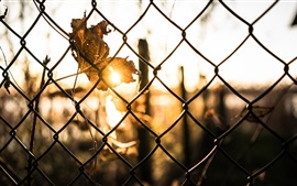 Preview wallpaper Wire fence, leaf, sun rays