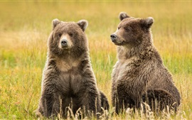 Preview wallpaper Alaska, Lake Clark, two brown bears in the grass