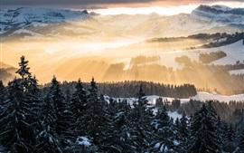 Aperçu fond d'écran Alpes, rayons de soleil, montagnes, matin, arbres, neige, hiver