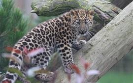 Amur leopardo filhote escalar árvore
