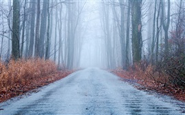 Preview wallpaper Autumn, fog, road, trees, forest