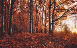 Preview wallpaper Autumn, forest, trees, red leaves ground
