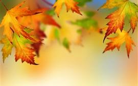Otoño, hojas de arce, fondo borroso