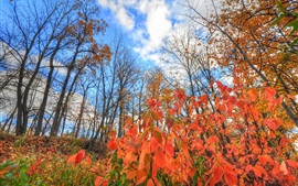 Preview wallpaper Autumn, red leaves, trees, blue sky