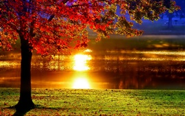 Autumn, tree, red leaves, lake, sunlight reflection, glare