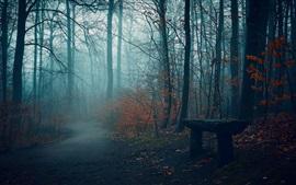 Autumn, trees, fog, bench, path, park